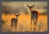 Постер животные 0502